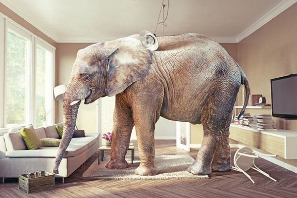 Are 10Gb/s Networks A White Elephant? - Article